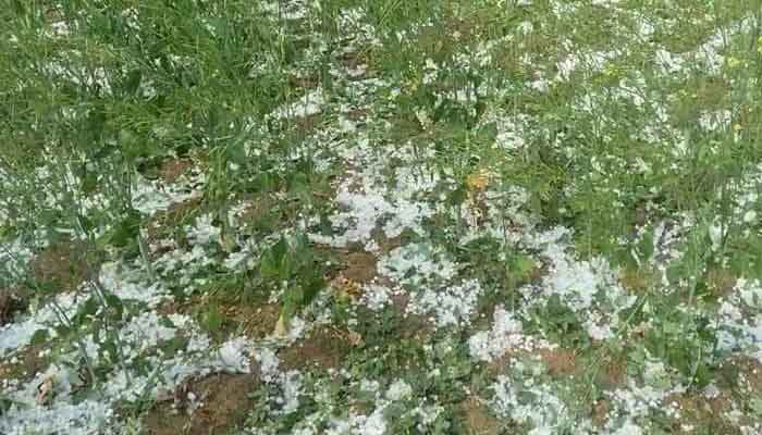 Hail damage to crops, Directorate of Horticulture, Chhattisgarh Raipur, Helpline number,