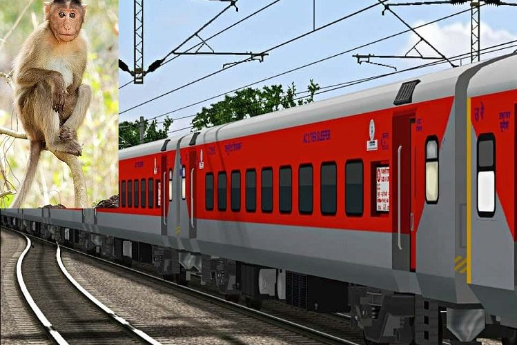 Bihar Off Beat: Amazing in Buxar, Bihar today…! A monkey's jump forced the galloping Rajdhani Express to brake on the trek, read this news| national News in Hindi
