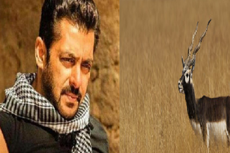 Black deer poaching case: Rajasthan High Court once again granted relief to Salman Khan, dismissed the petition filed by the state government, accused of giving false affidavit| entertainment News in Hindi
