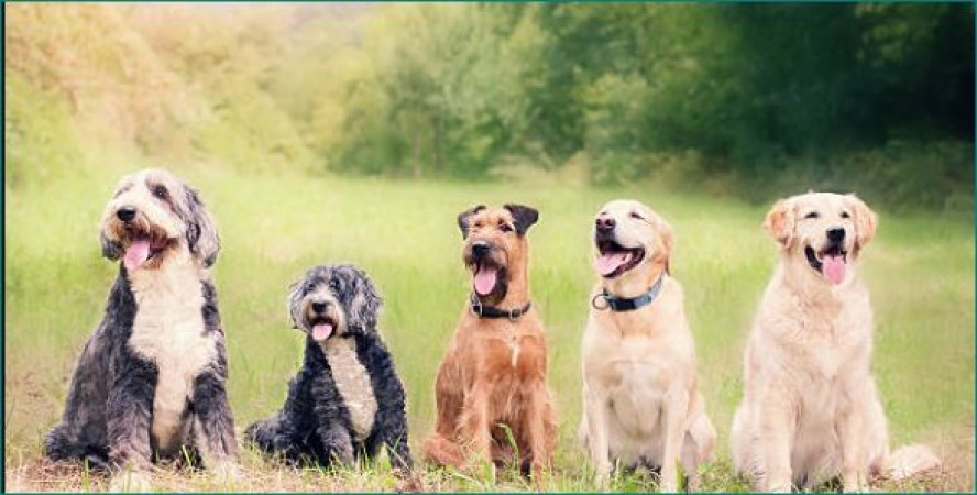 Ujjain: Acid poured into the mouths of dogs roaming on the road, 5 died